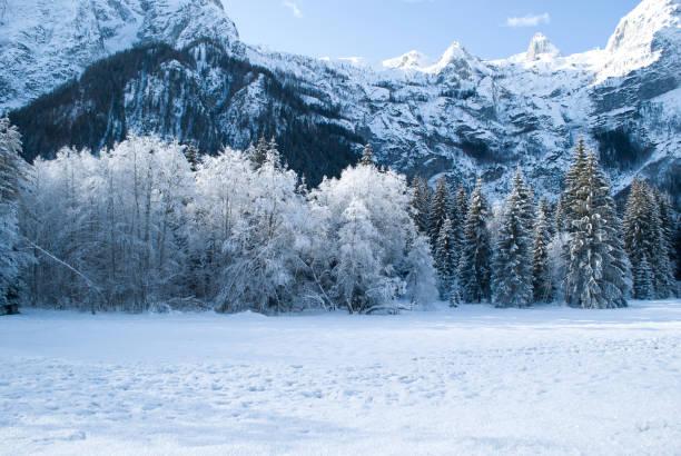 een mooie dag in het bos tussen koude en sneeuw - siberië stockfoto's en -beelden