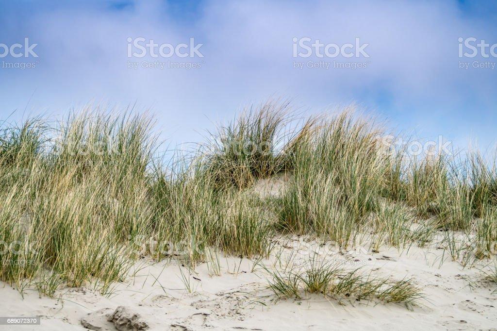 a beautyfull sand dune with grass stock photo