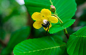 a bee on the yellow flower