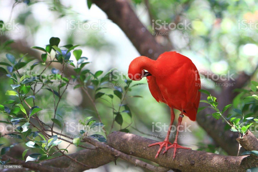 香港海洋公園的一隻鳥圖像檔