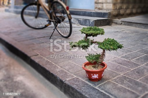 potted pine bonsai tree on the background of the facade of a Chinese building