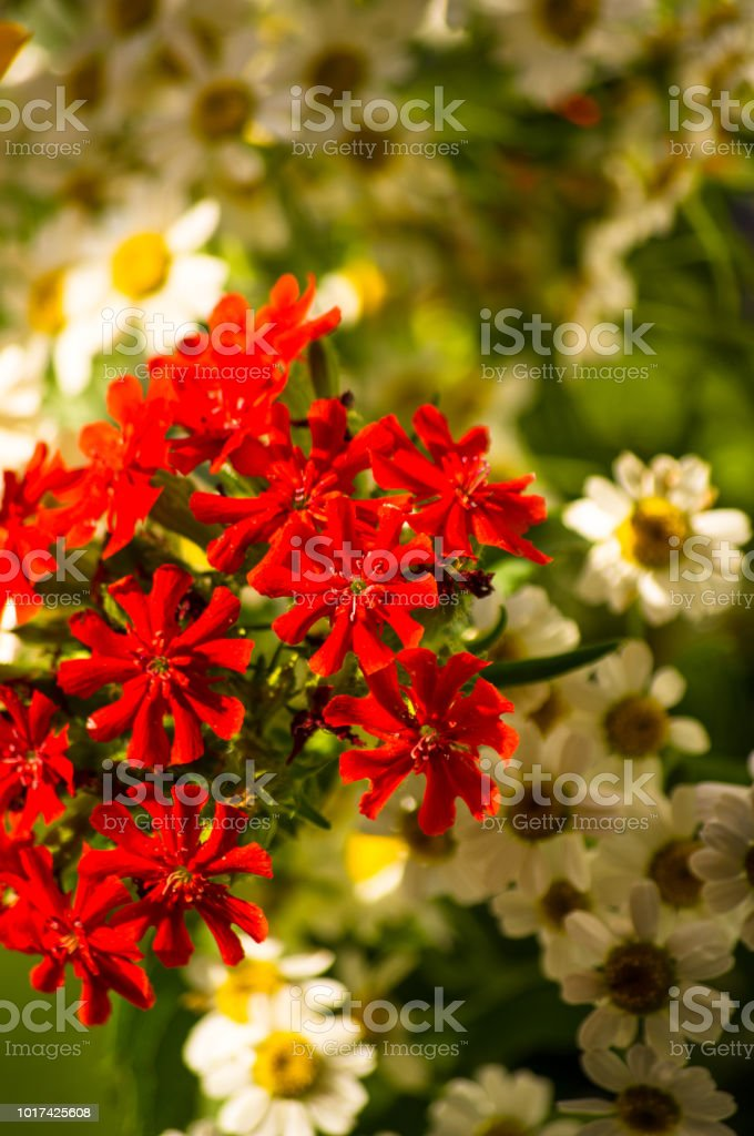 A Bouquet Of Bright Spring Flowers Of Various Types Stock Photo