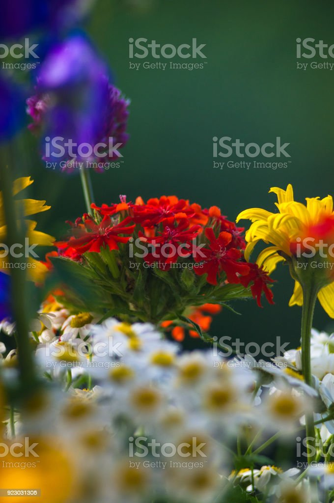 A Bouquet Of Bright Spring Flowers Of Various Types Stock Photo Istock