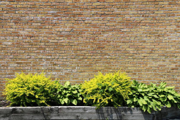 a bright sunny natural brown brick garden wall behind lush plants in an offset stone flower bed and shadows perfect for background marketing material as well as wallpaper card poster backdrop stock photo