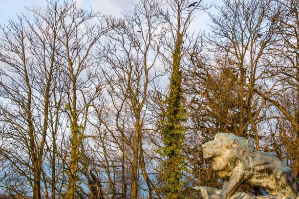 ein Löwe aus Bronze-Statue vor Bäumen – Foto