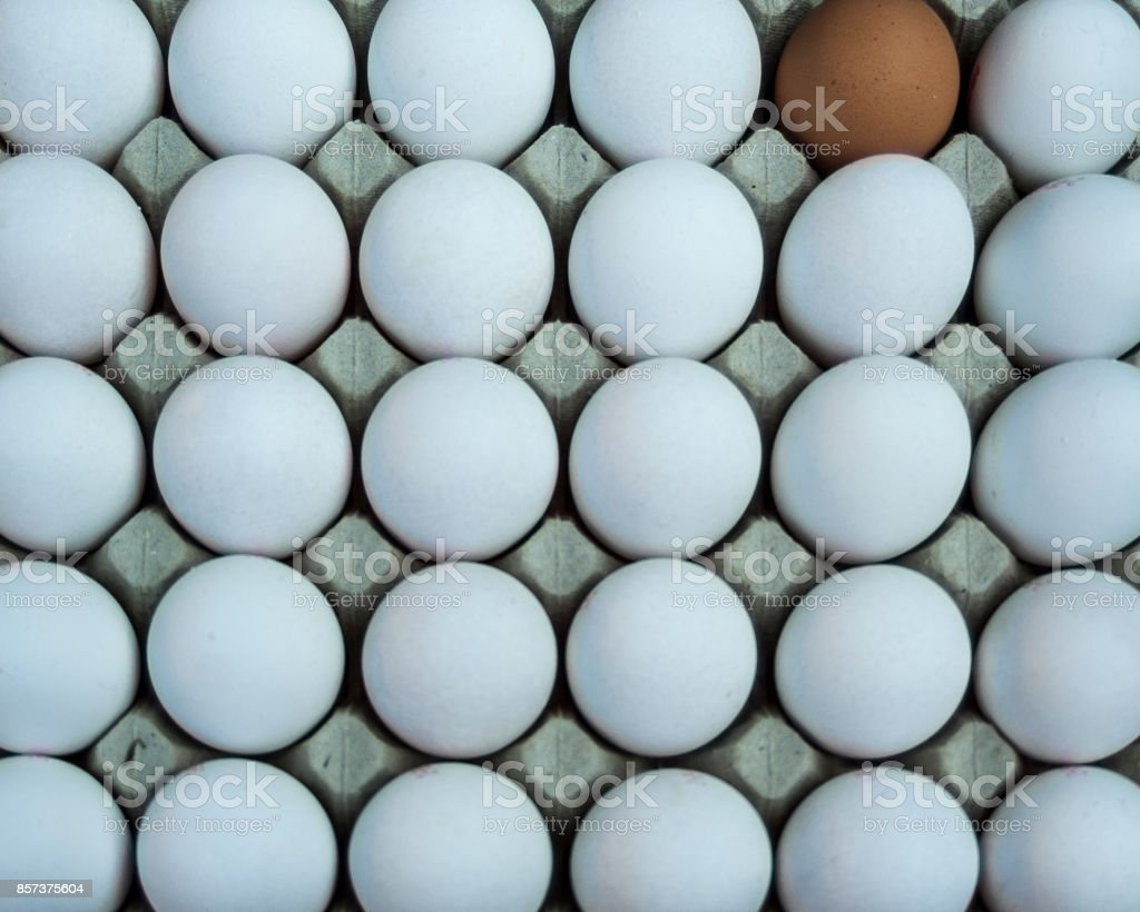a brown egg and 29 white eggs in an egg board at a market stock photo