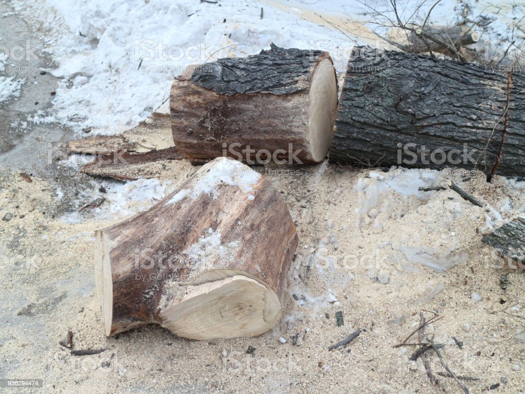 a bunch of sawed branches stock photo