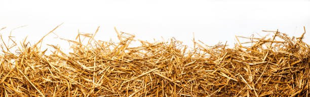 a bunch of straw as border, isolated with white background a bunch of straw as border, isolated with white background hay stock pictures, royalty-free photos & images