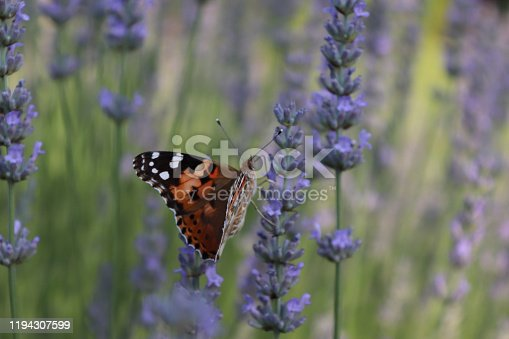 a buttlerfly is sitting on a flower in the fieild