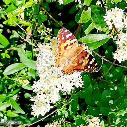 a butterfly is sitting on a flower in the garden