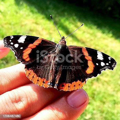 a butterfly is sitting on a hand in the garden