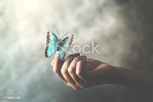 a butterfly leans on a woman's hand