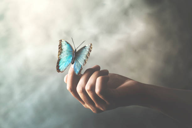 a butterfly leans on a woman's hand stock photo