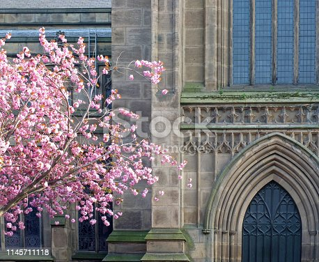 a cherry tree with pink blossom in front of the facade of leeds minster showing the front door and windows