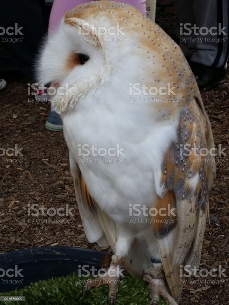 a collection of owls stock photo