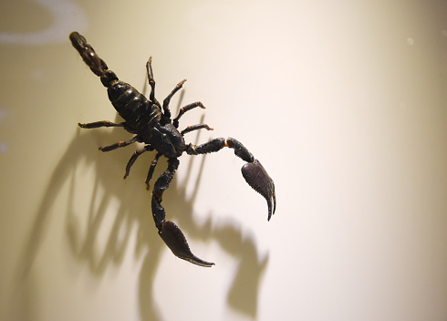 a collection of scorpions that are preserved