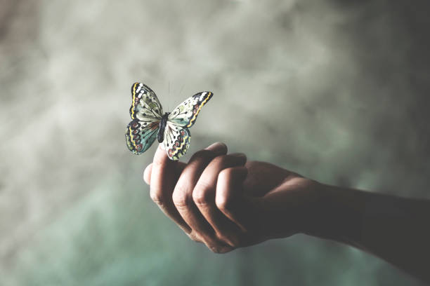 a colorated butterfly leans on a woman's hand stock photo