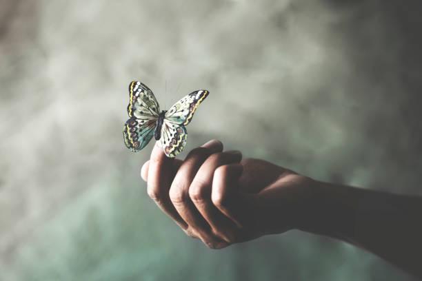 ein gefärbter Schmetterling lehnt sich an die Hand einer Frau – Foto