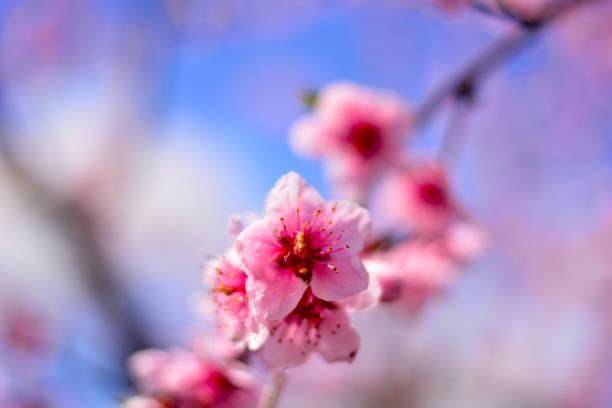 Ein farbenfroher Zweig im Frühling – Foto