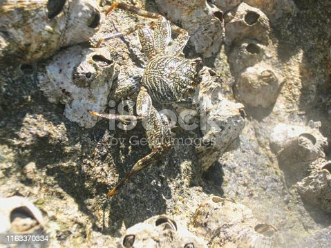 a crab on the rock