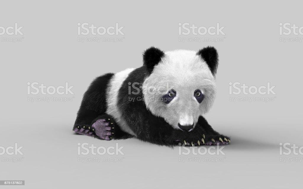 545e843200e1fc Ein Niedlicher Panda Bär Stockfoto und mehr Bilder von Asien - iStock