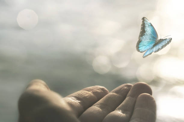 a delicate butterfly flies away from a woman's hand stock photo