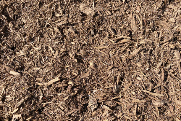a detailed wide angle view looking down at some natural and dry mulch ground covering stock photo