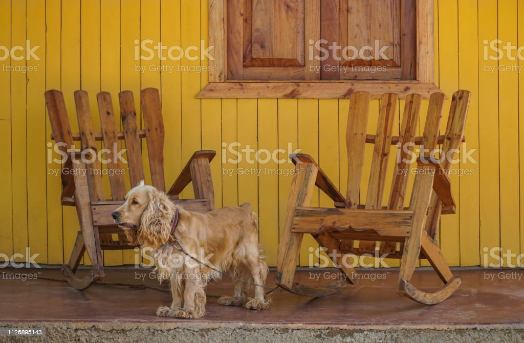 Marvelous A Dog And Wooden Rocking Chairs On Veranda Stock Photo Squirreltailoven Fun Painted Chair Ideas Images Squirreltailovenorg