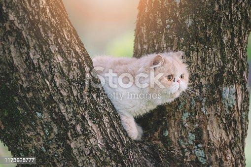a domestic cat climbing up a tree at public park