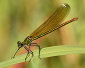 a dragonfly perched on the leaf of an aquatic plant