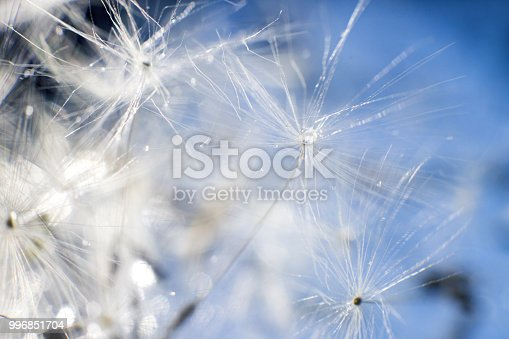 istock a drop of water on a dandelion. dandelion on a blue background with  copy space close-up 996851704