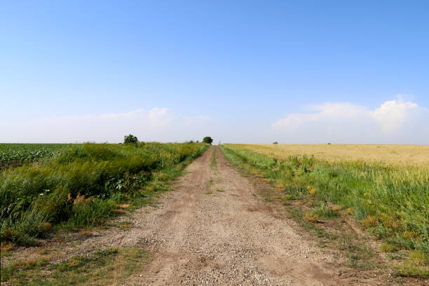 a farmland dirt road running between a green crop field and grass land under a beautiful blue sky perfect for seasonal marketing as well as cards posters signs and background backdrop wallpaper stock photo
