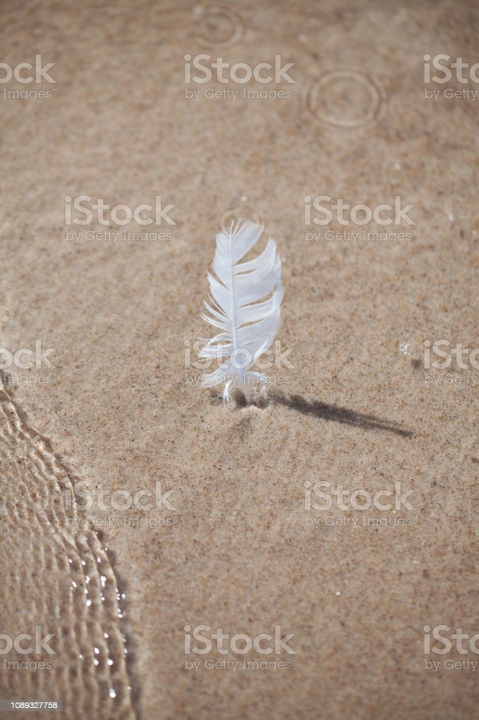 a feather stuck in the sand on the beach. vacation memory. sea stock photo