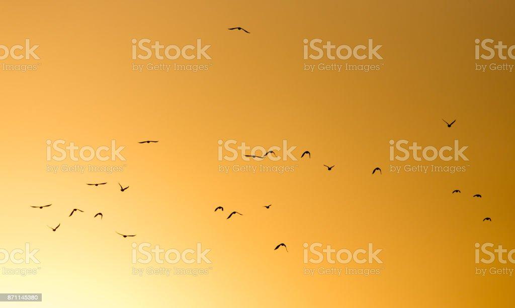a flock of birds on the golden sunset stock photo