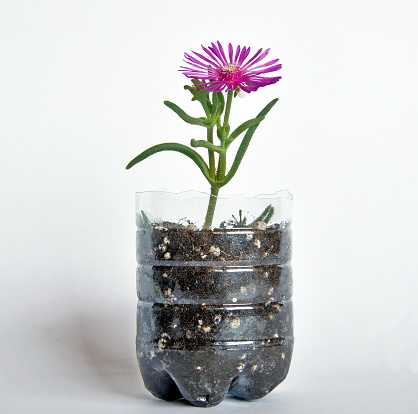 a flower grown inside a plastic bottle