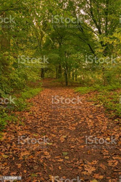 Photo of a forest path in the fall