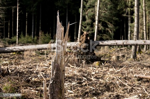 a forest with storm damage