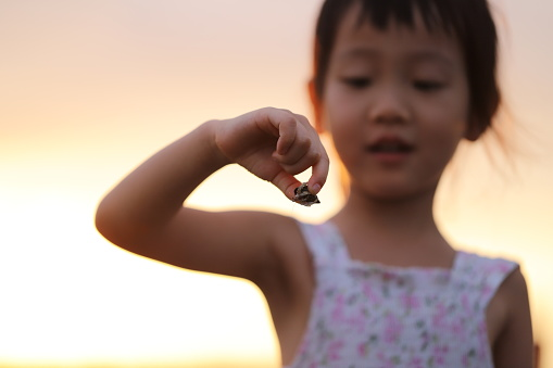 a asian girl catching a hermit crab under sunset.