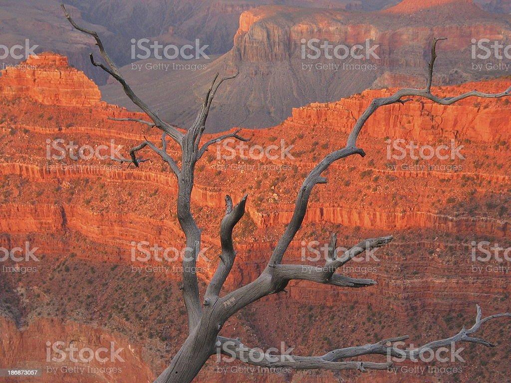 a grand tree royalty-free stock photo