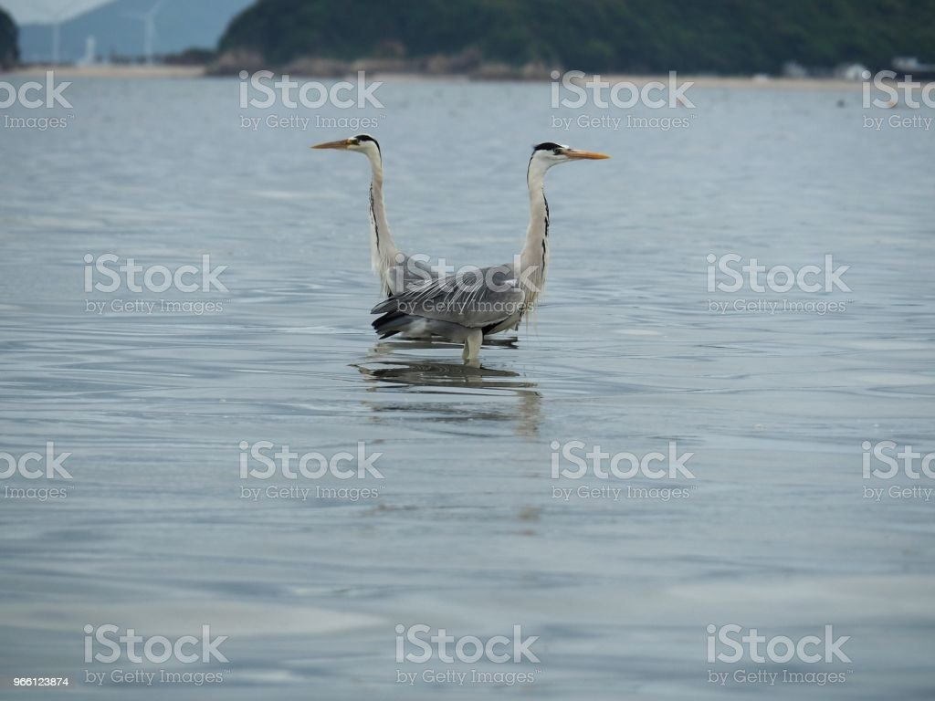 a gray heron - Royalty-free Animal Foto de stock