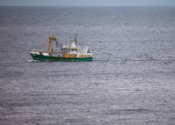 a green cutter with a flock of seagulls on the North Sea