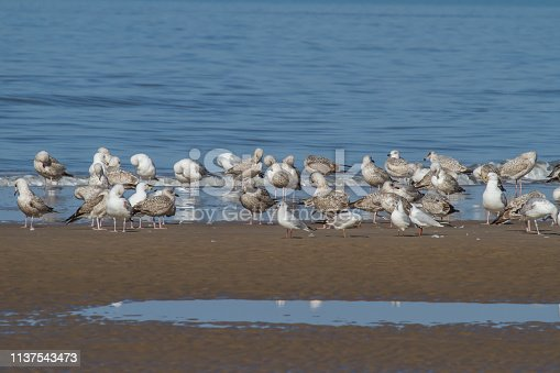 a group of seagulls is standing close to the water on the beach