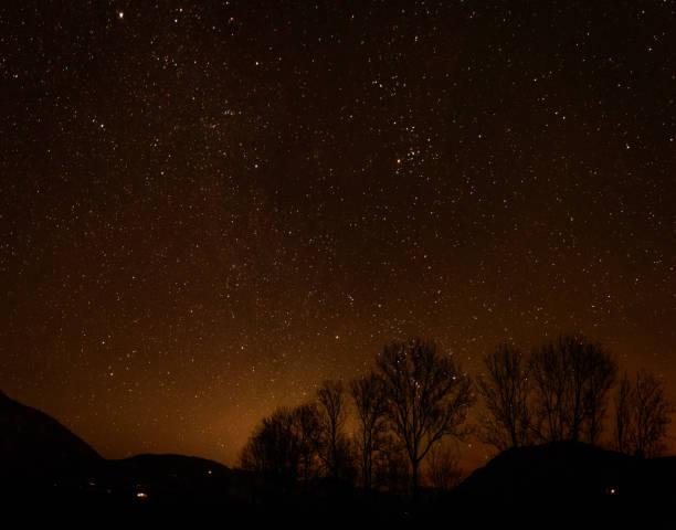eine Gruppe von Bäumen vor dem nächtlichen Himmel – Foto