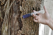 a hand with syringe blue medicine injection to the tree trunk skin is diseased, a sick tree and skin care healing concept