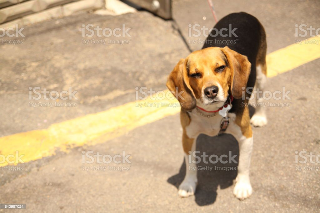a handsome dog stock photo