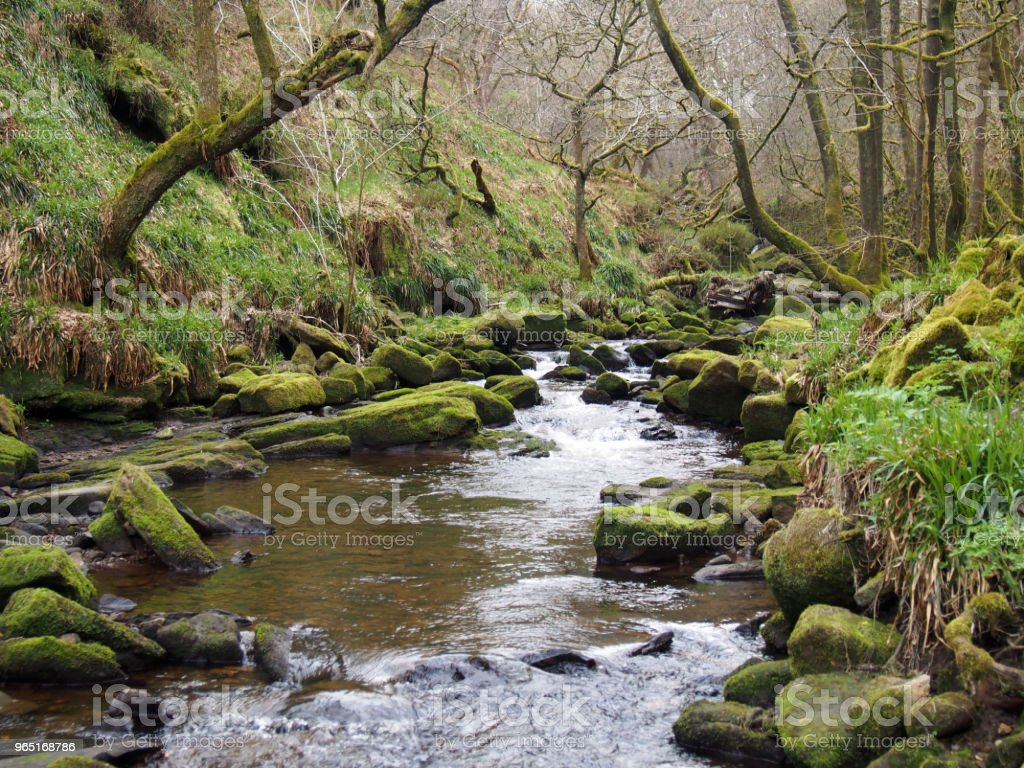 a hillside stream running though moss covered rocks and boulders with overhanging trees an early spring forest landscape in the colden valley in west yorkshire england royalty-free stock photo
