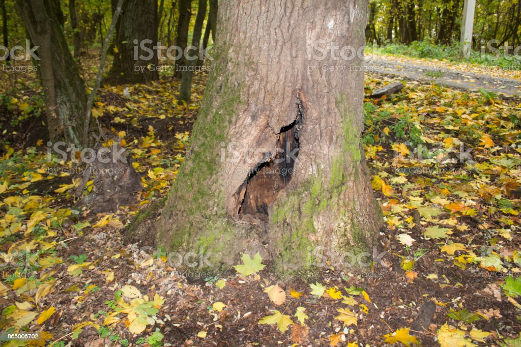 a hole in a tree in the woods stock photo