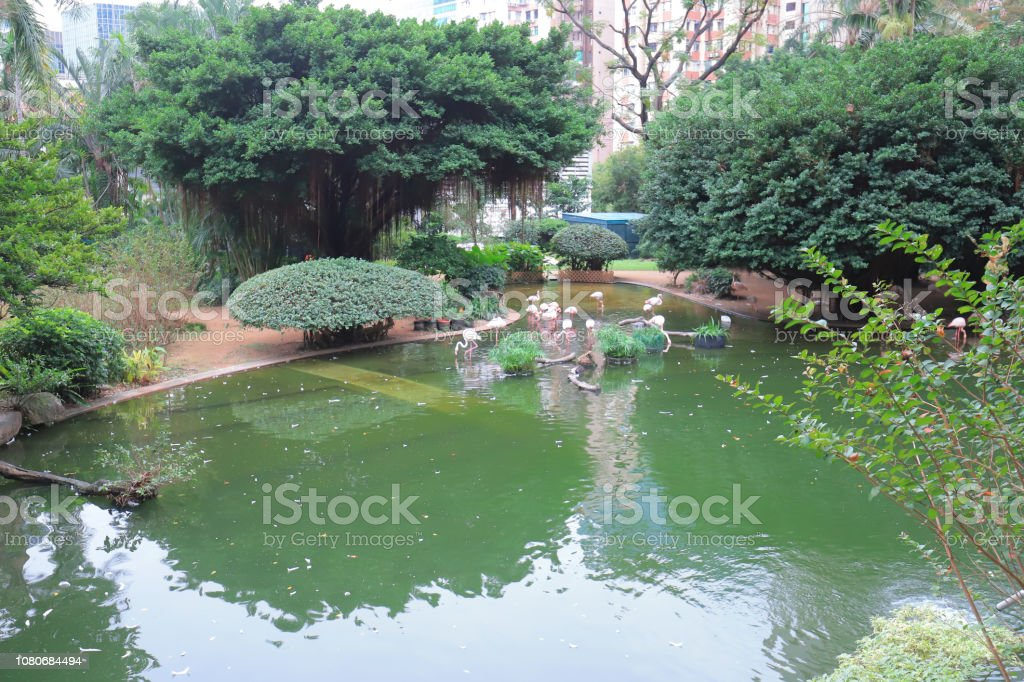 九龍公園, 市區綠化綠洲, 火烈鳥圖像檔