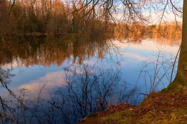 See im Wald – Foto