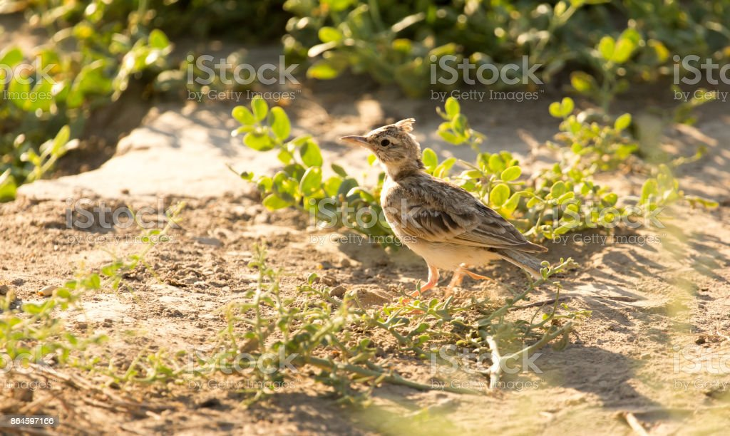 a little bird on the ground in nature stock photo